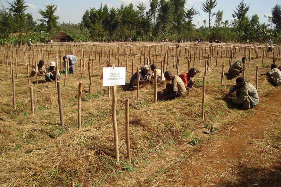 Éthiopie aide alimentaire