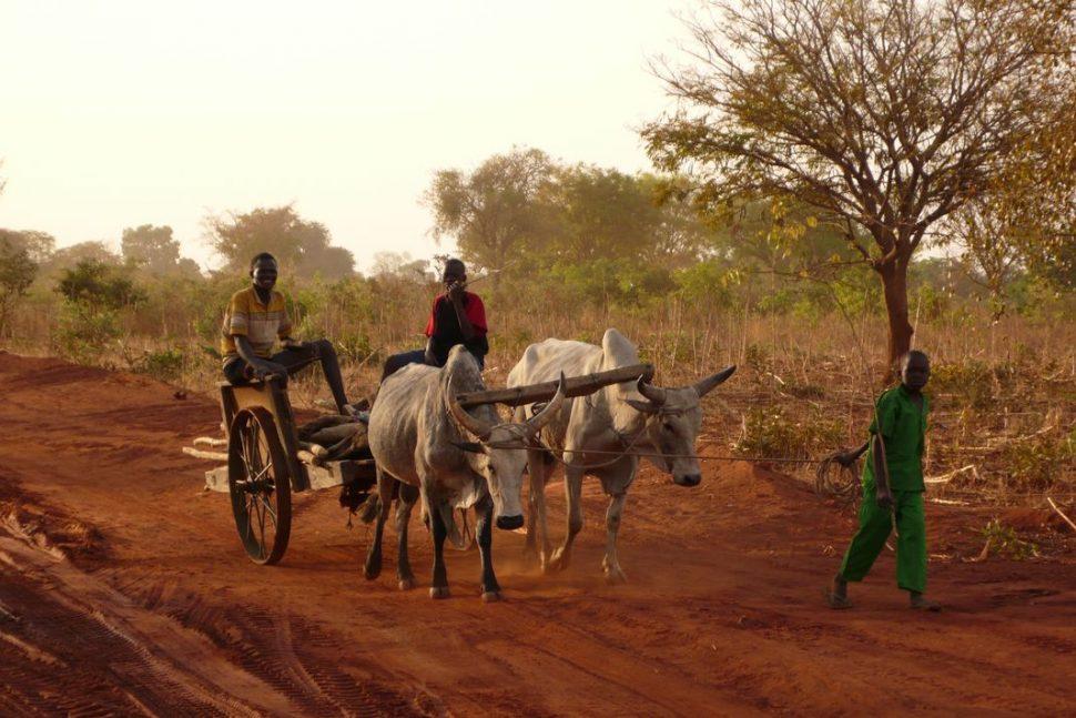 Concern Tchad