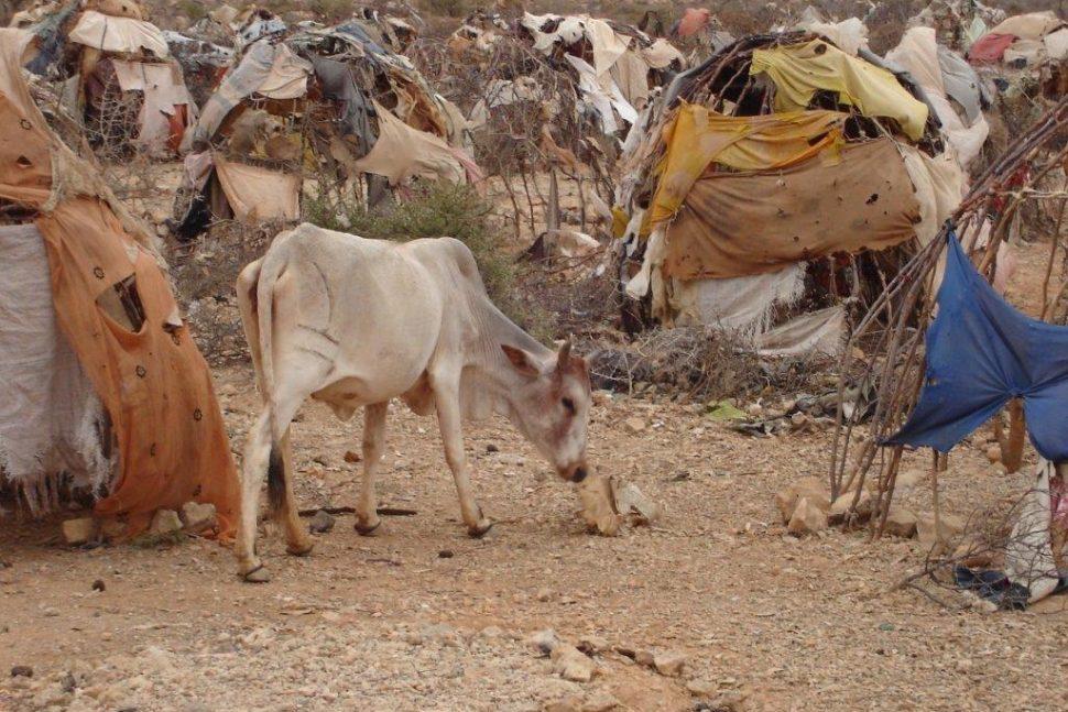 Déplacés Somalie