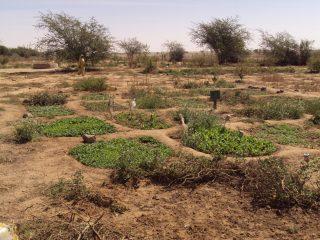 Espace agricole en zone aride avec quelques parcelles de verdures