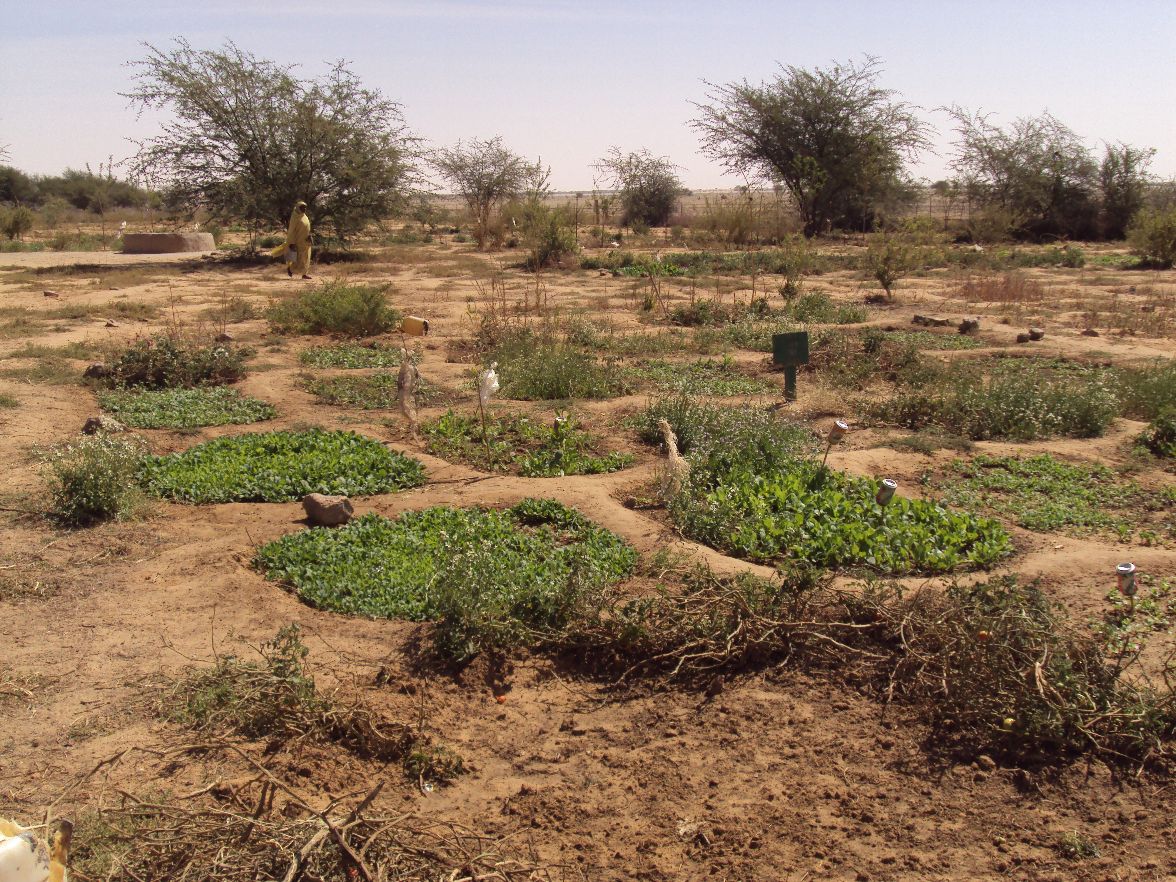 Espace agricole en zone aride